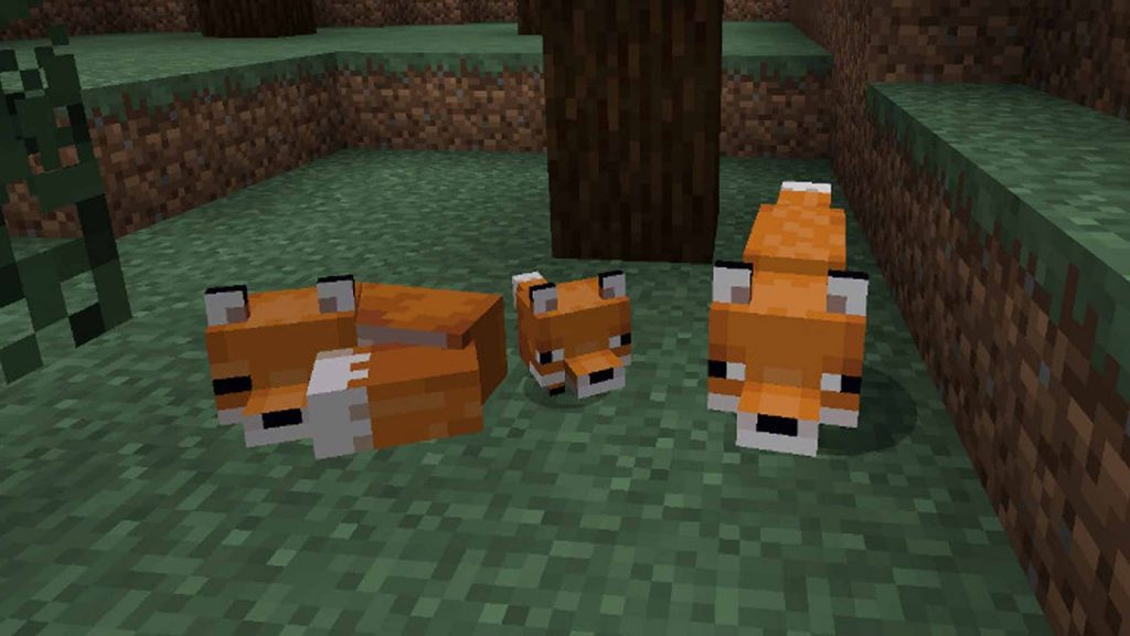 Tame a fox in minecraft